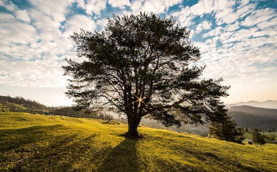 Tree-338211 960 720